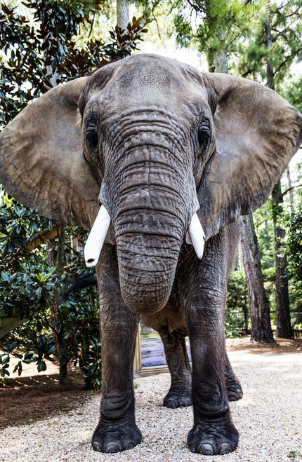 Photo of cute elephant.
