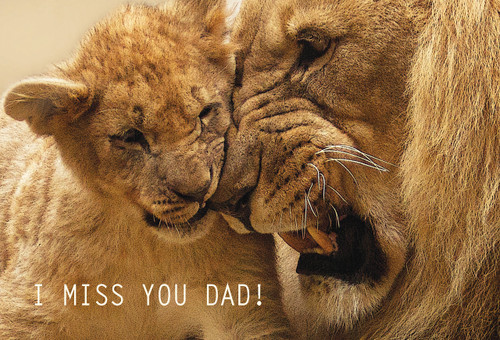 I Miss You Dad Postcard with lions.
