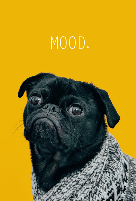 Mood Postcard with pug.