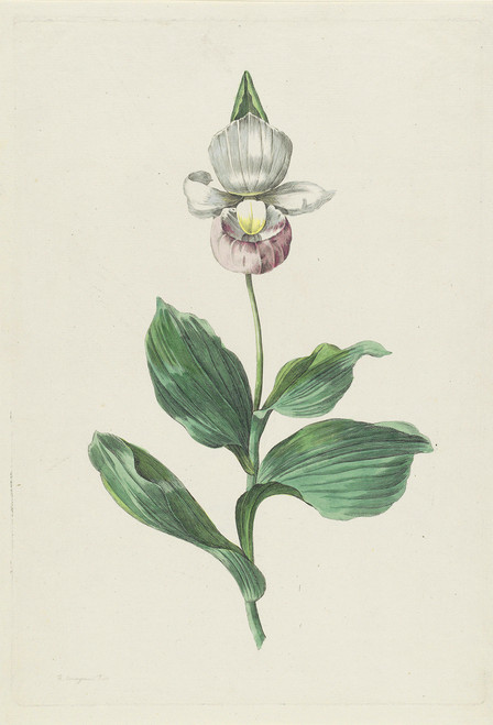 Botanical Flower Postcard.