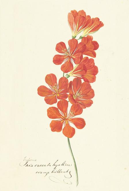 Botanical Flower 2 postcard.