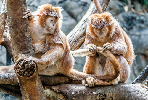 Best Friends Postcard with monkeys.