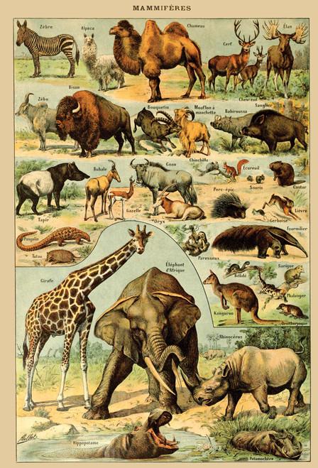 African Animals Chart Postcard.