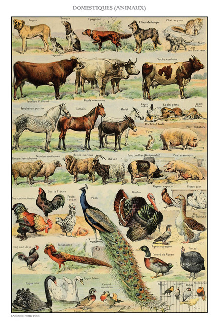 Farm animals chart postcard.