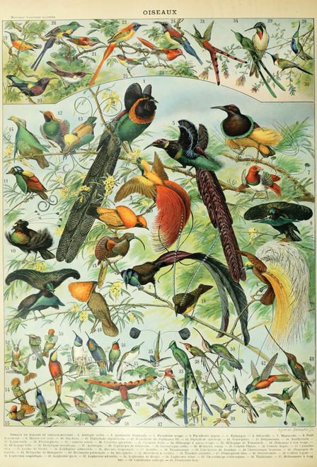 Birds chart postcard.