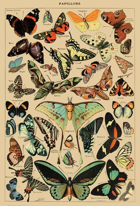 Butterflies postcard.