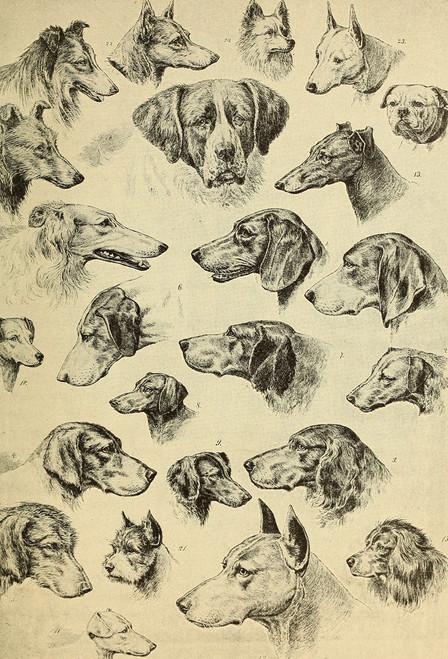 Dogs Postcard.