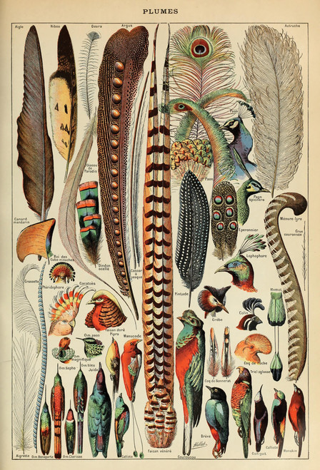Feather Birds Chart Postcard.