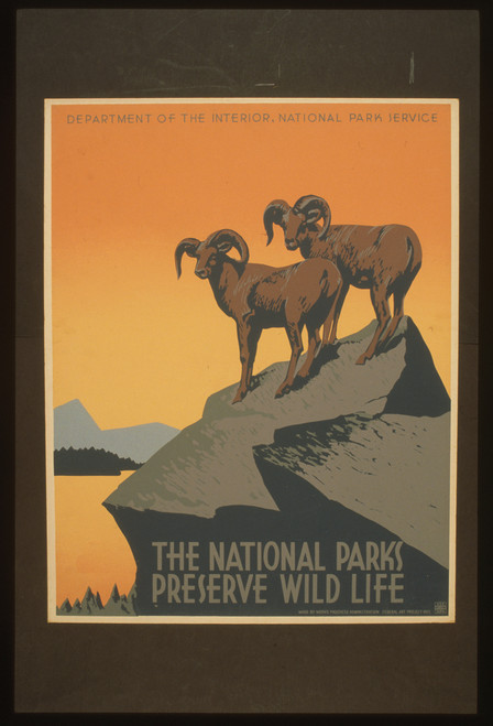 National Park Wild Life Postcard.