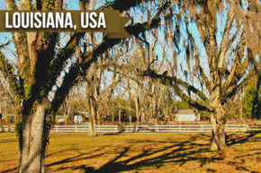 What Goes On In A Pecan Orchard?