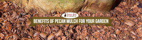 Benefits Of Pecan Mulch For Your Garden