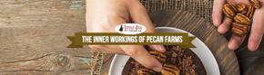 The Inner Workings of Pecan Farms
