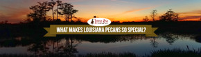 What Makes Louisiana Pecans So Special?
