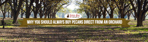 Why You Should Always Buy Pecans Direct From An Orchard