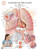 Lung Poster