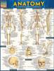 Anatomy Chart