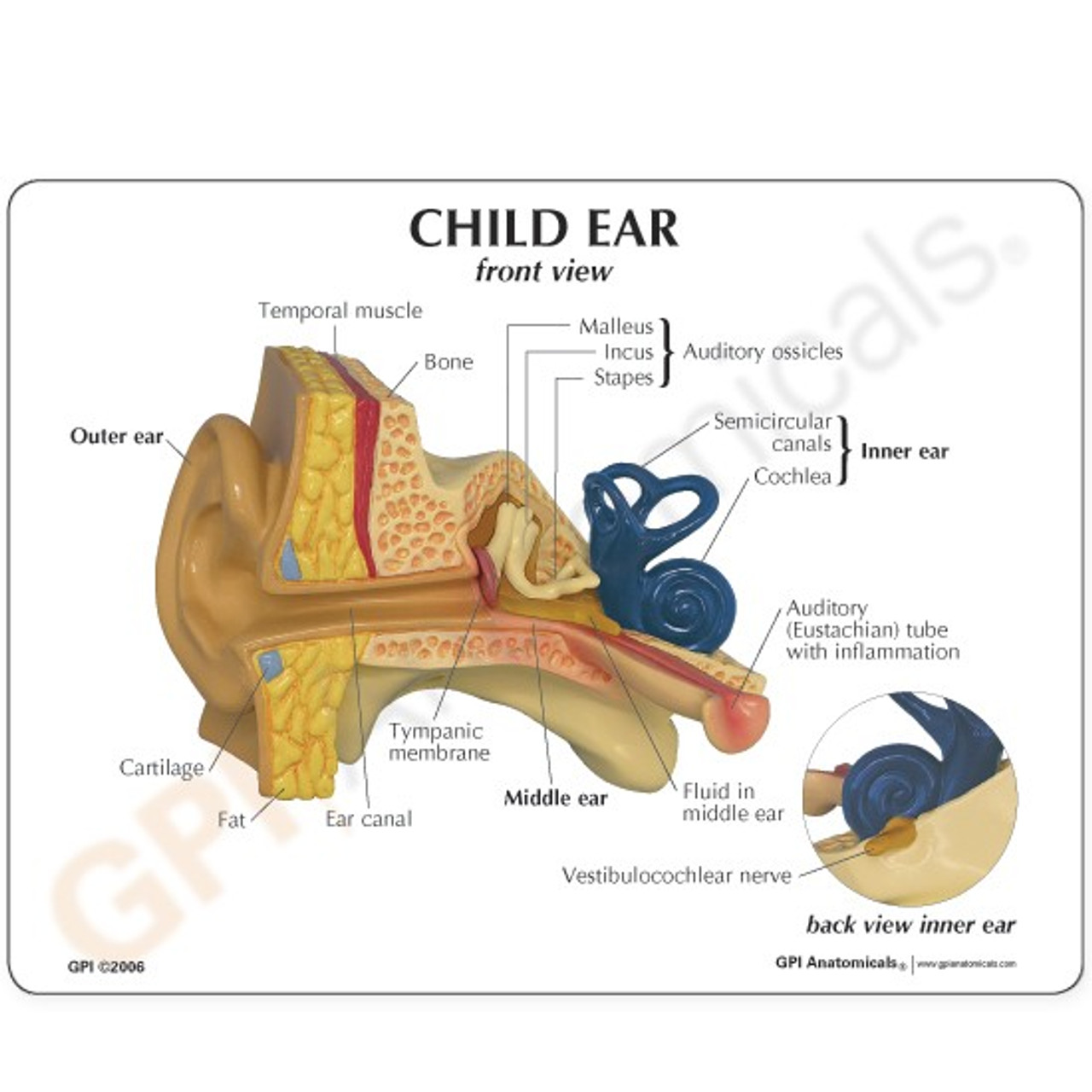 Ear Model Description Card