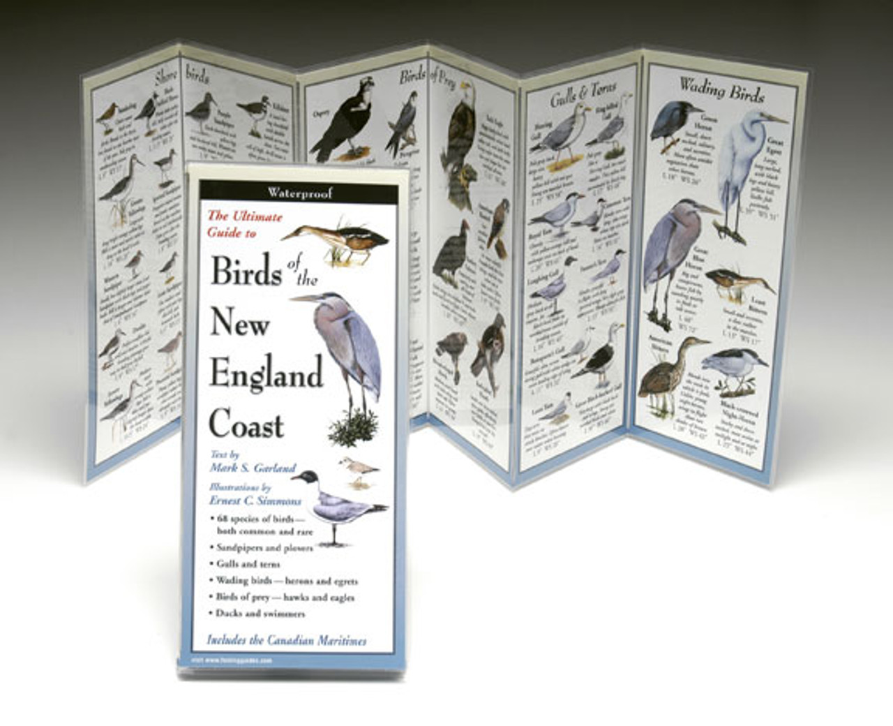 Birds of the New England Coast - Folding Guide