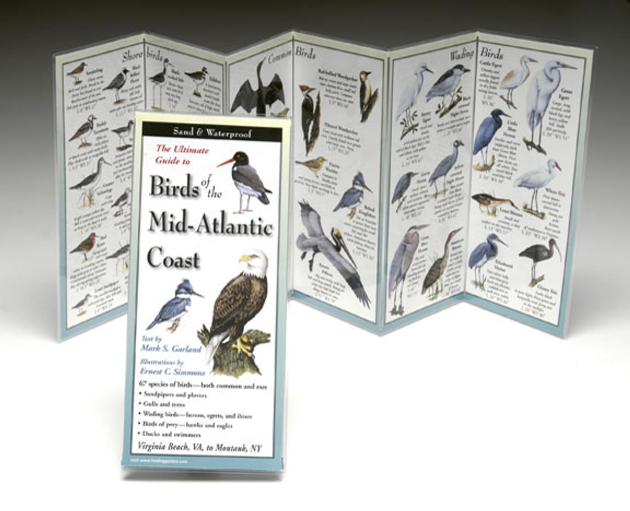Birds of the Mid-Atlantic Coast