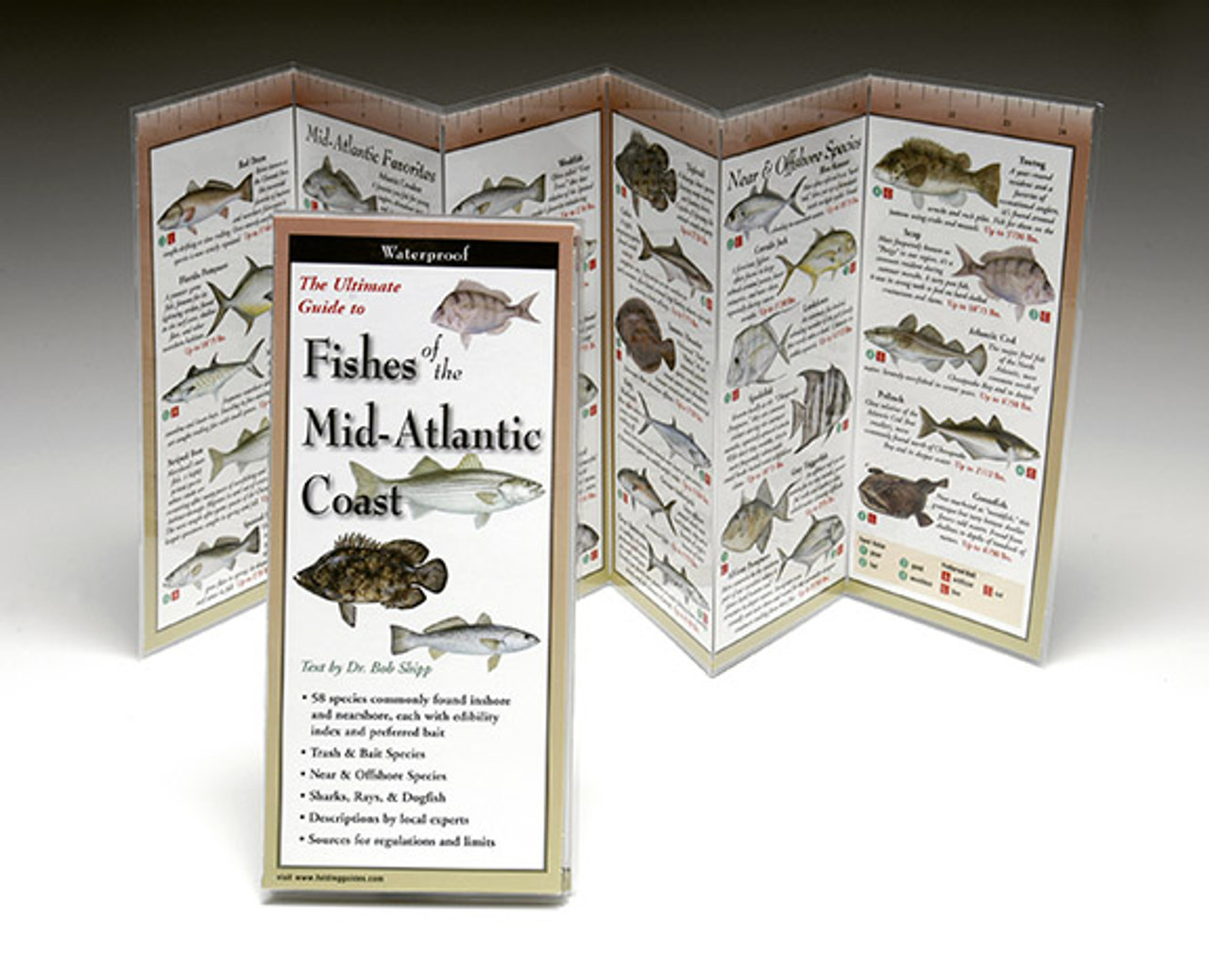 Fishes of the Mid-Atlantic Coast