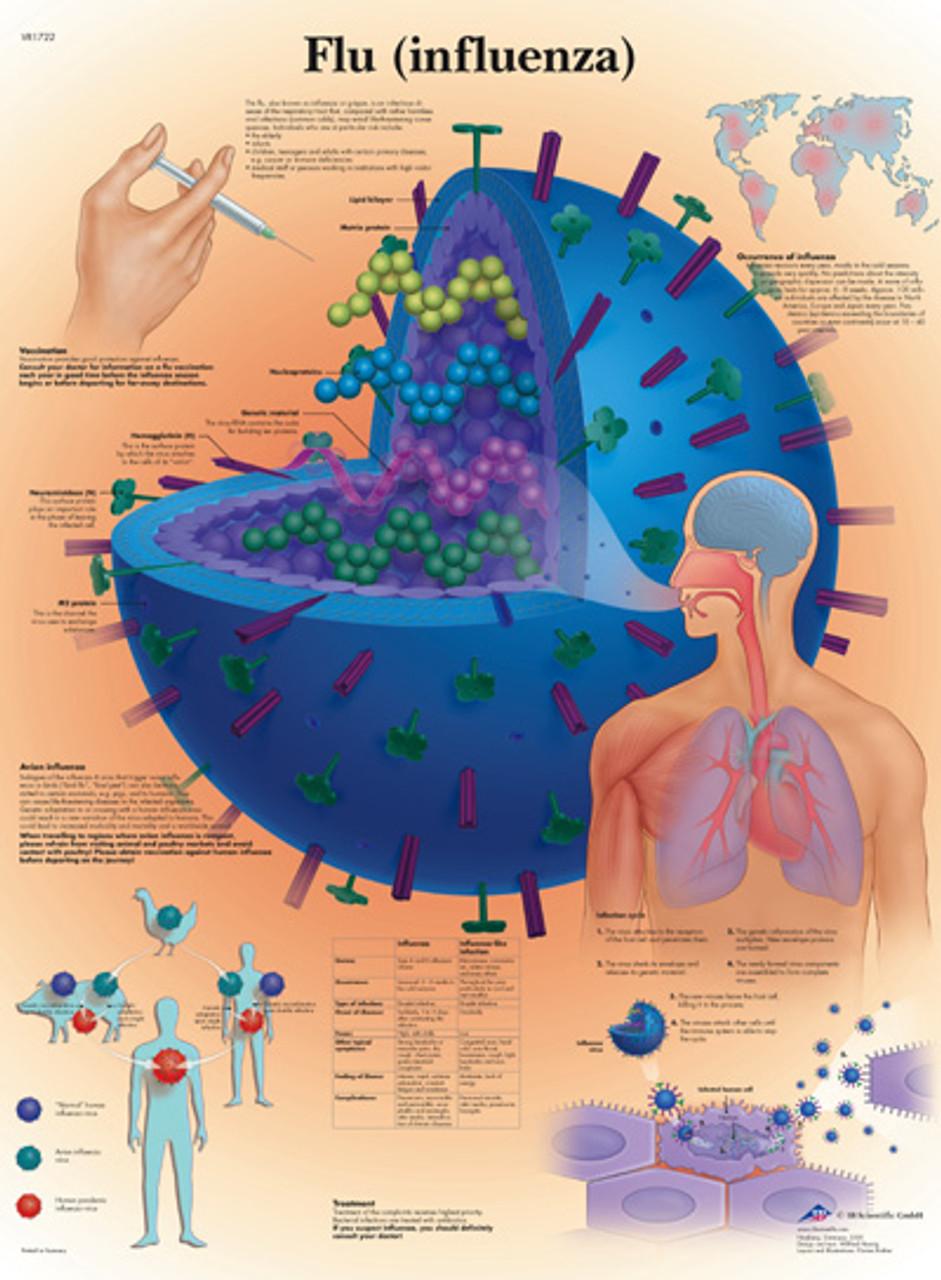 Flu (Influenza) Chart