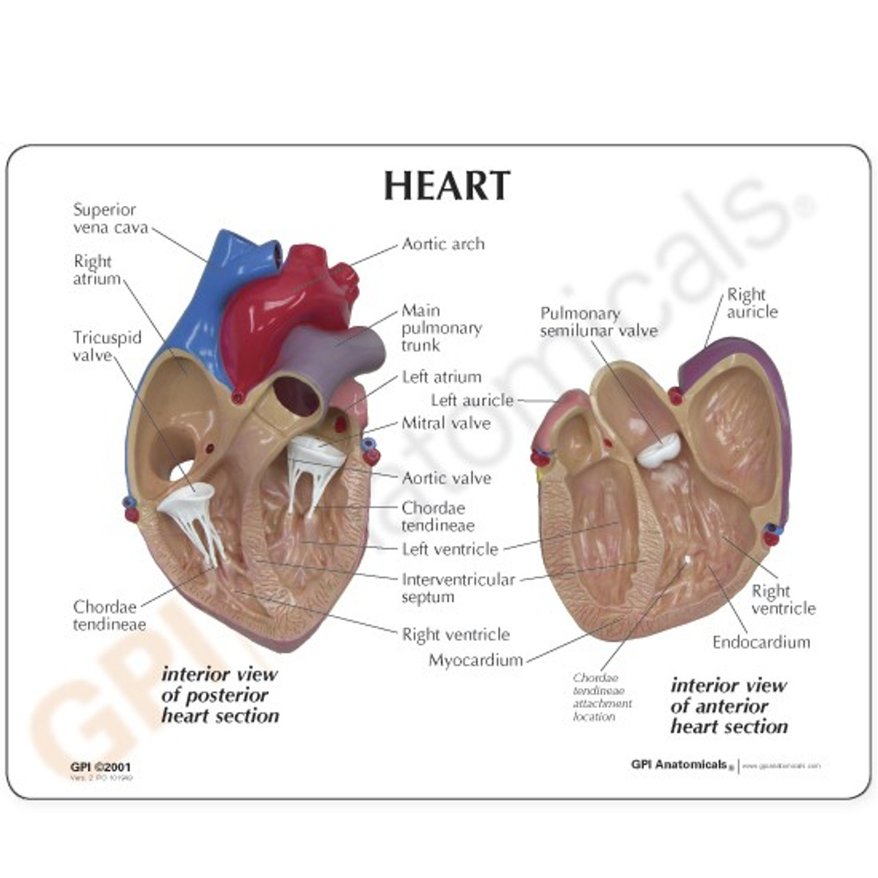 Heart Model Description Card