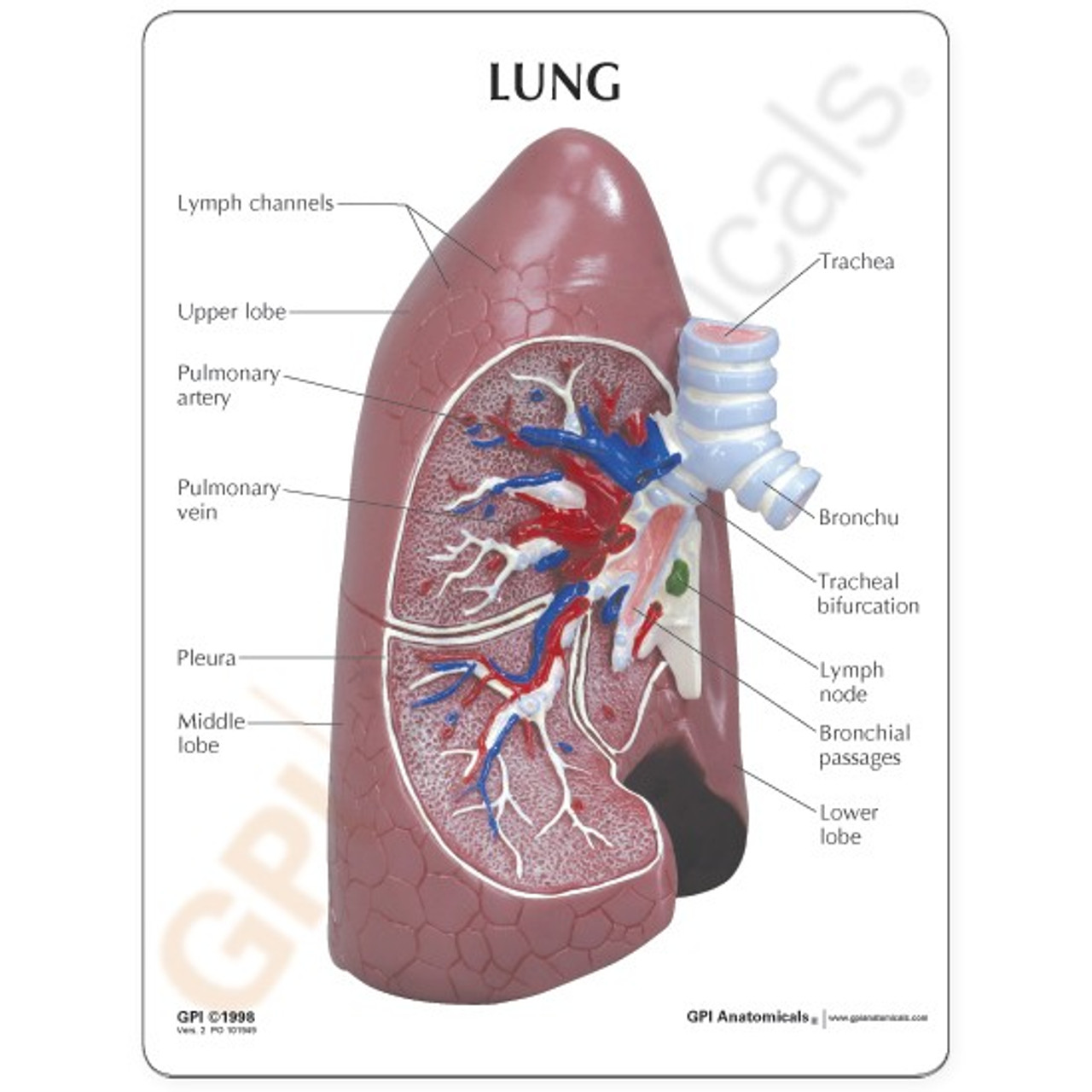 Lung Model Description Card