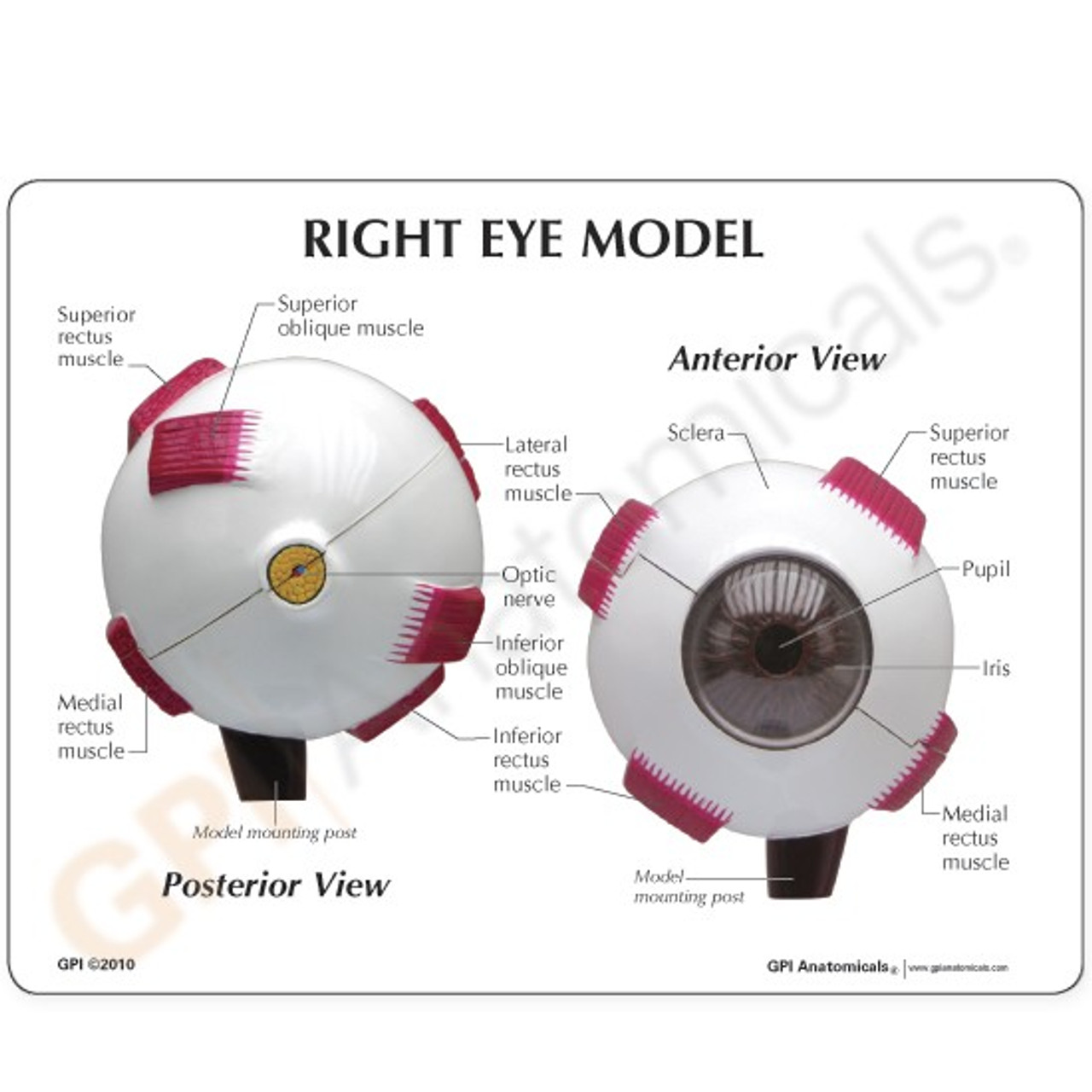 Eye Model Description Card