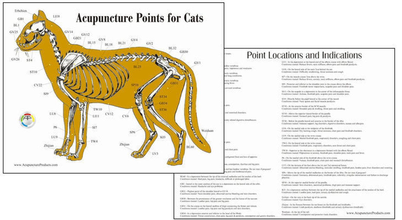 Cat Acupuncture Chart
