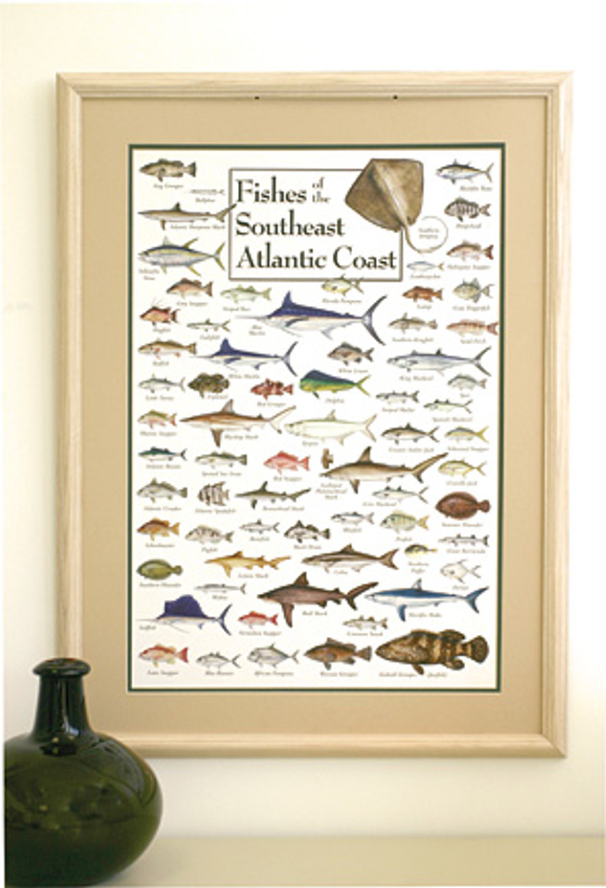 Fishes of the Southeast Atlantic Coast Poster