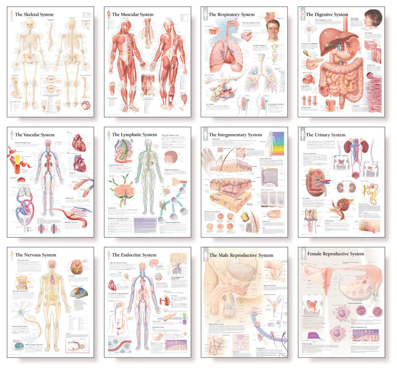 Complete Body System Chart Set