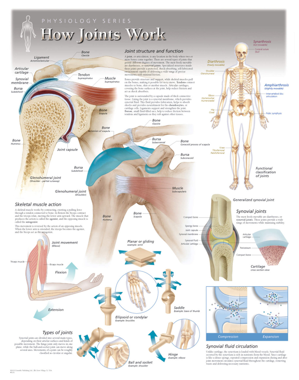 How Joints Work Poster