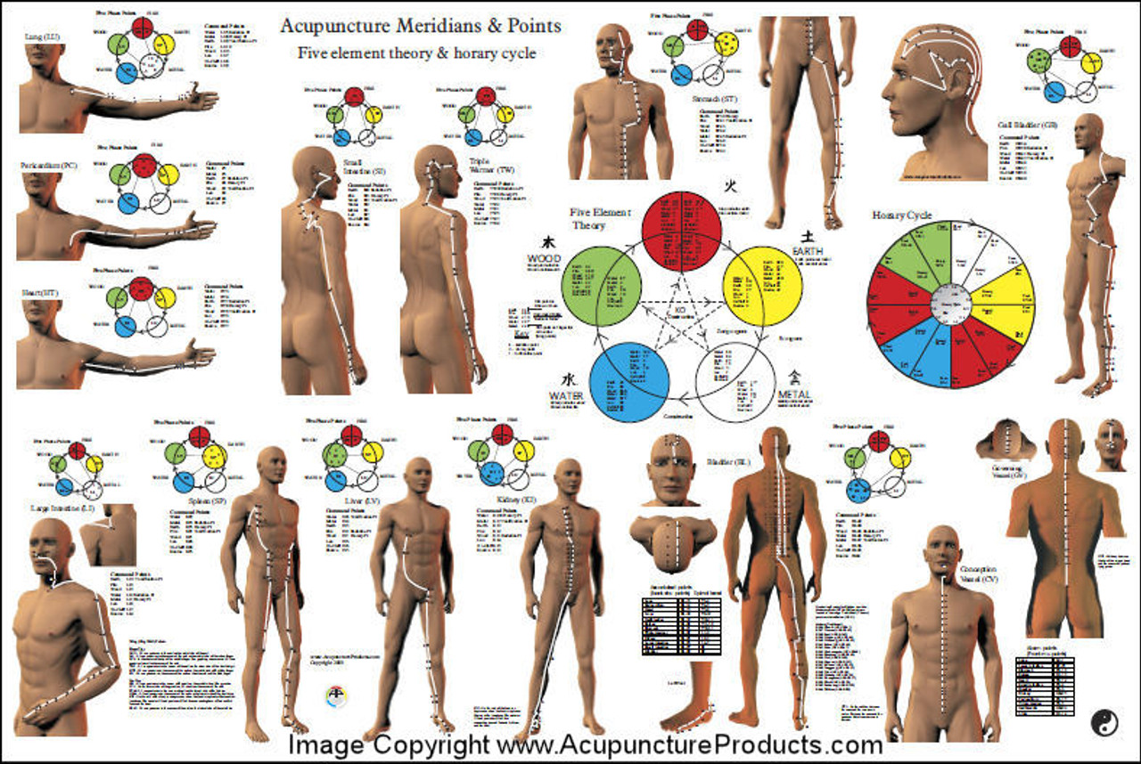 "Acupuncture Meridian Points and Pathways Poster 24"" X 36"""
