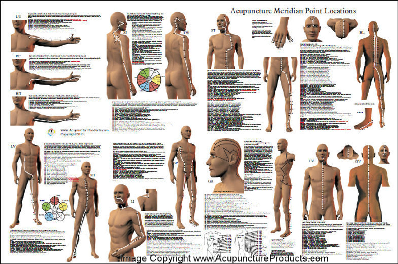 Acupuncture Point Location Reference Poster 24
