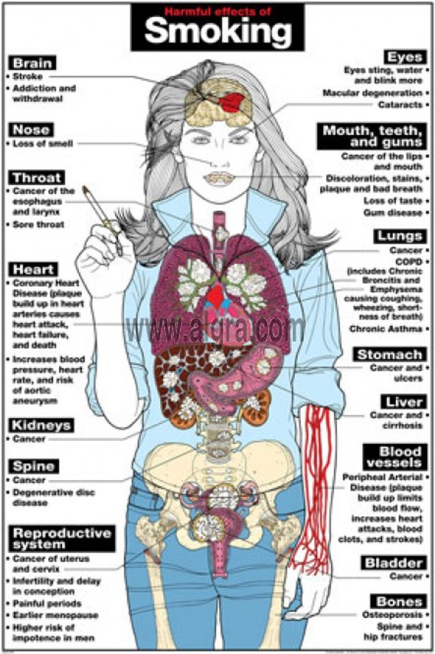 smoking effects on the body poster
