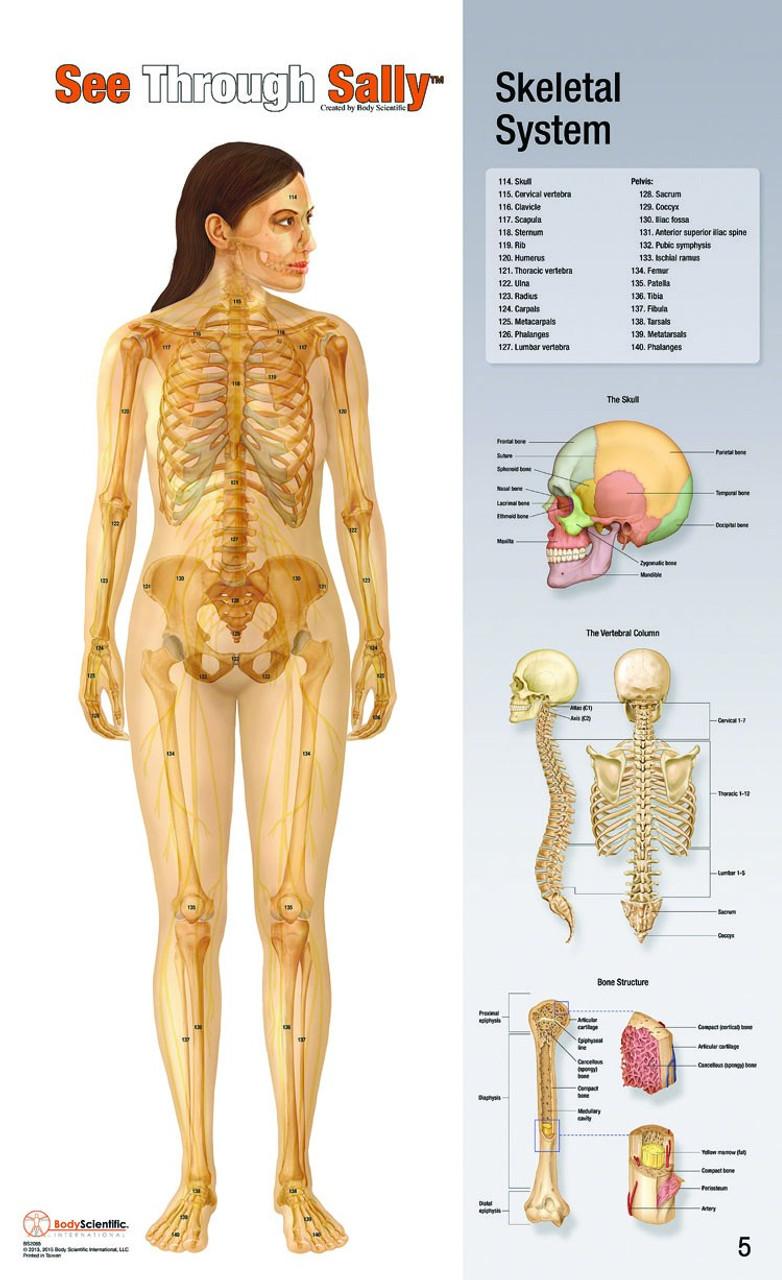 Anatomy Flip Chart Set