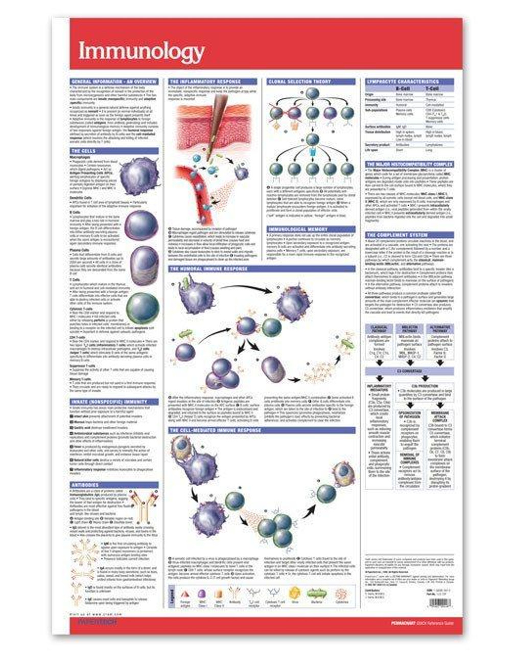 Immunology Poster