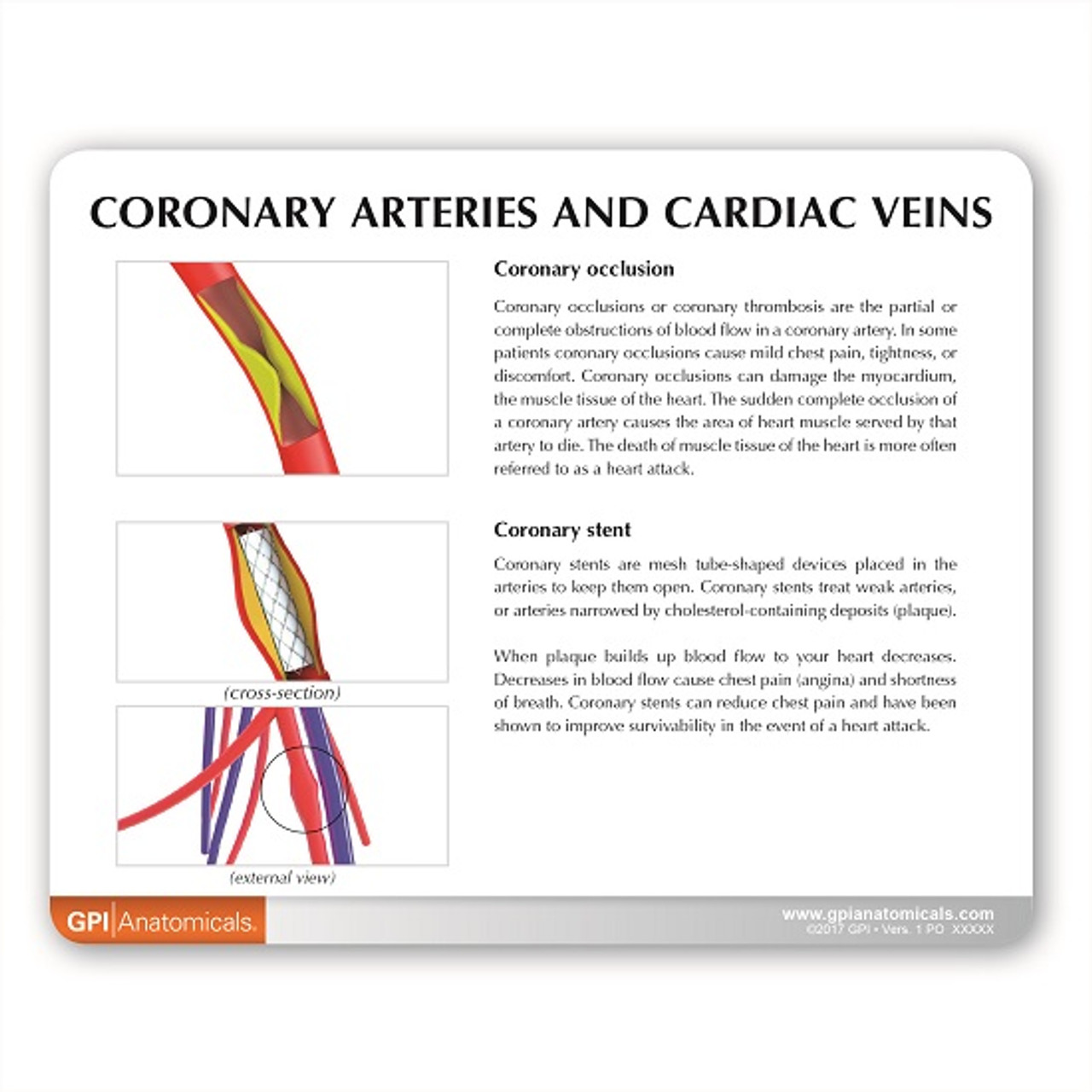 Coronary  Artery/ Cardiac Vein Description Card