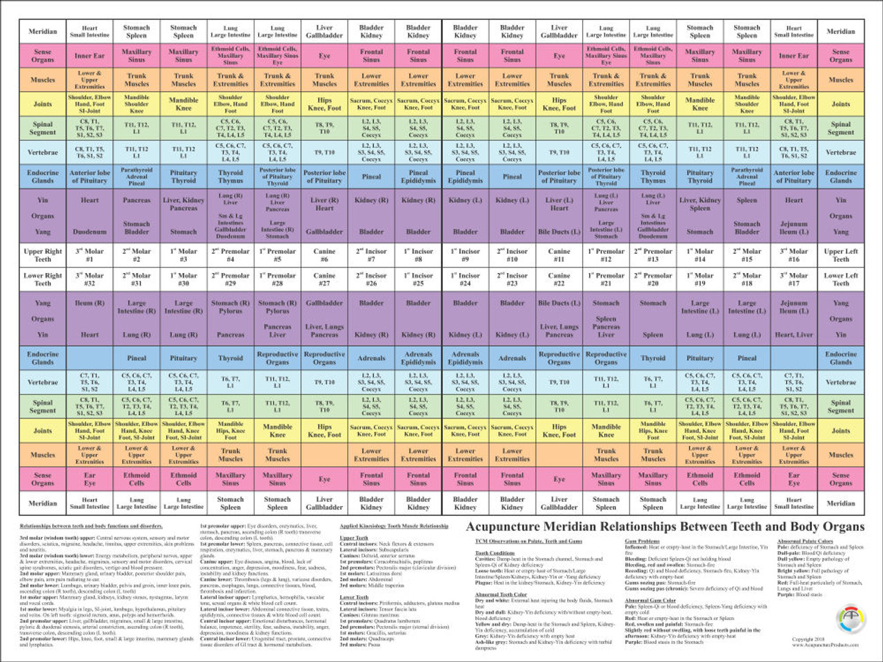 18 x 24 Dental Meridian Poster