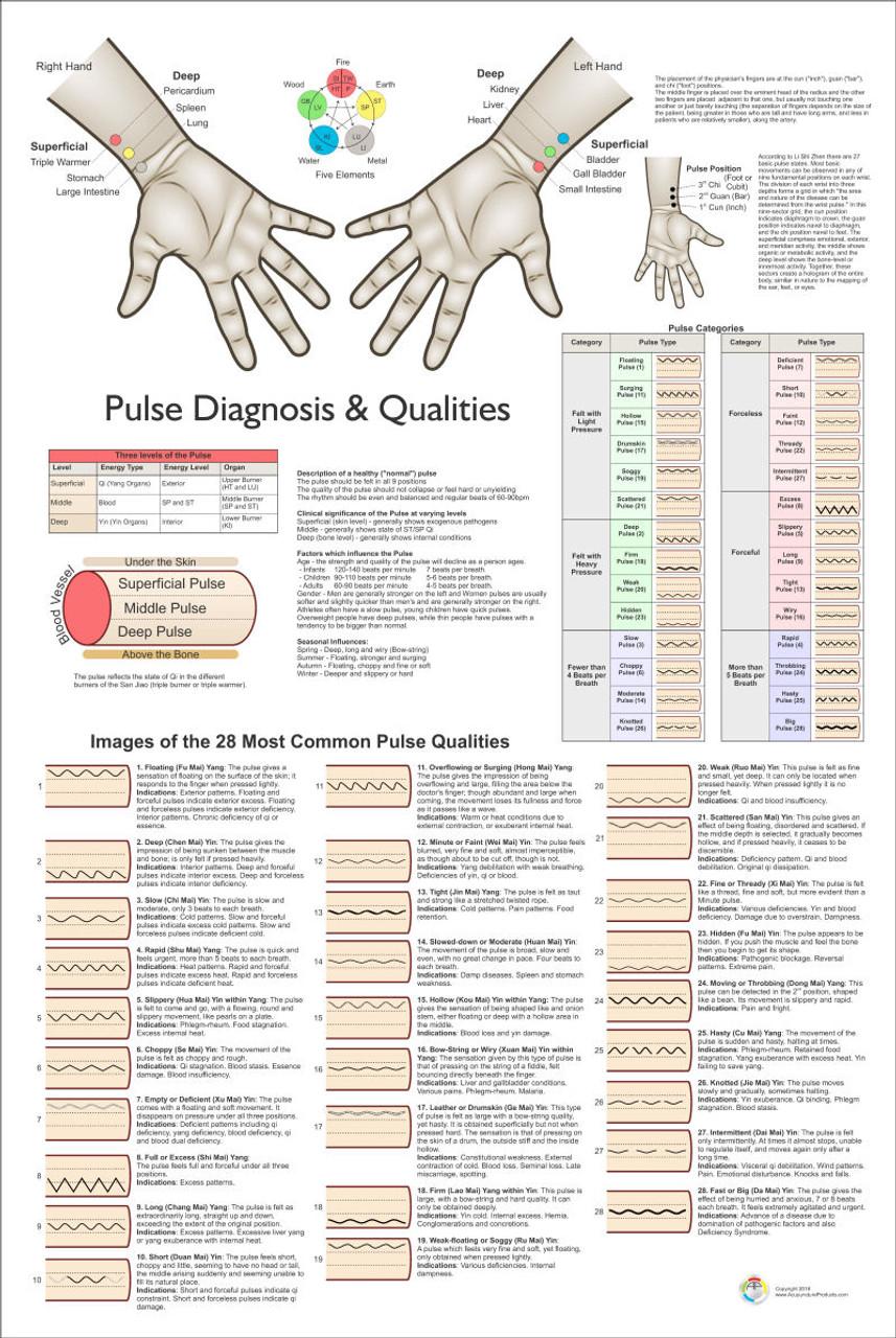 Pulse Diagnosis 24 x 36