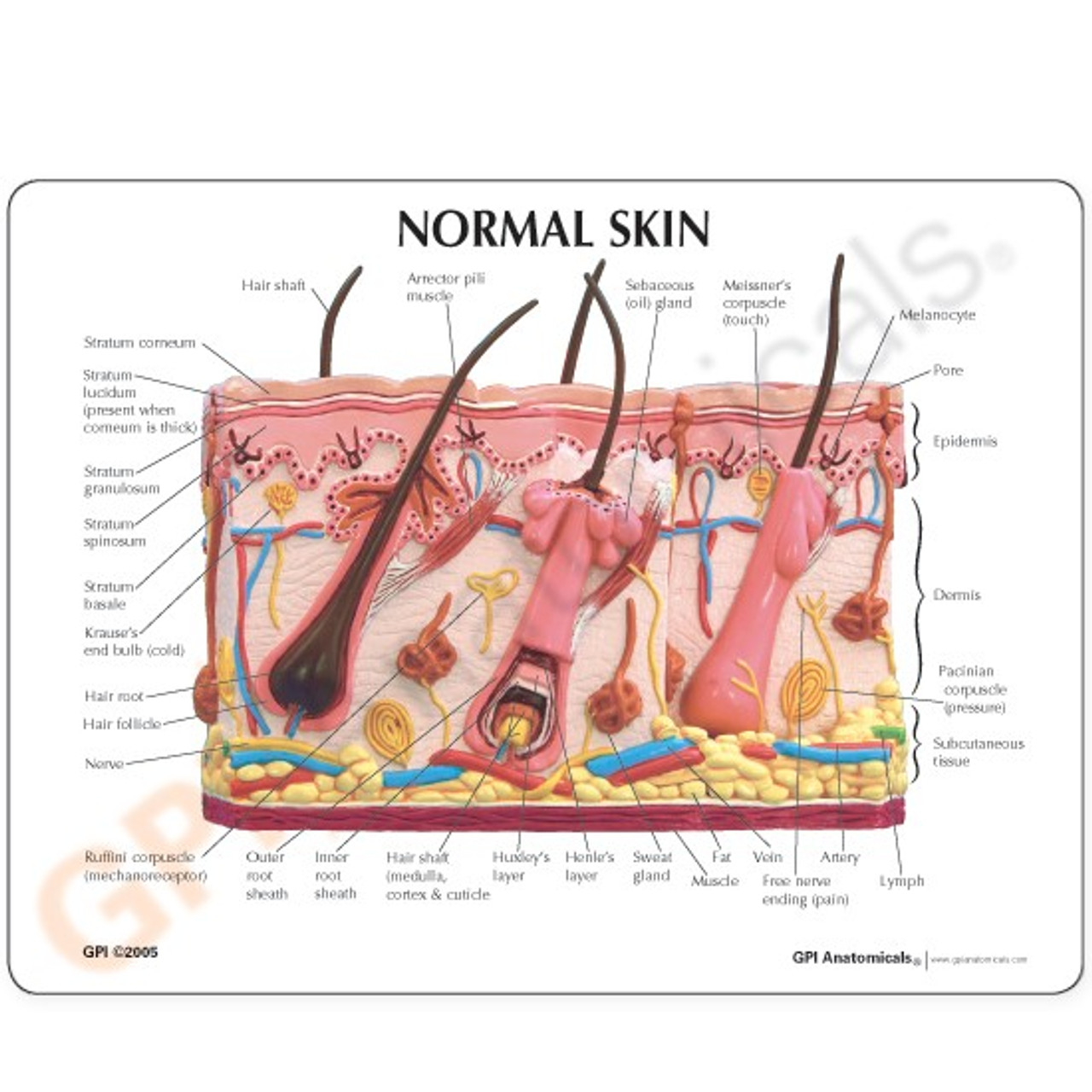 Skin Burn & Normal Skin Model Description Card