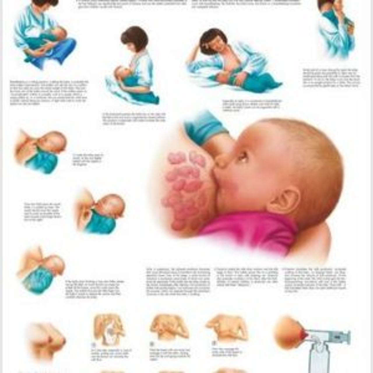 Breastfeeding Anatomical Poster