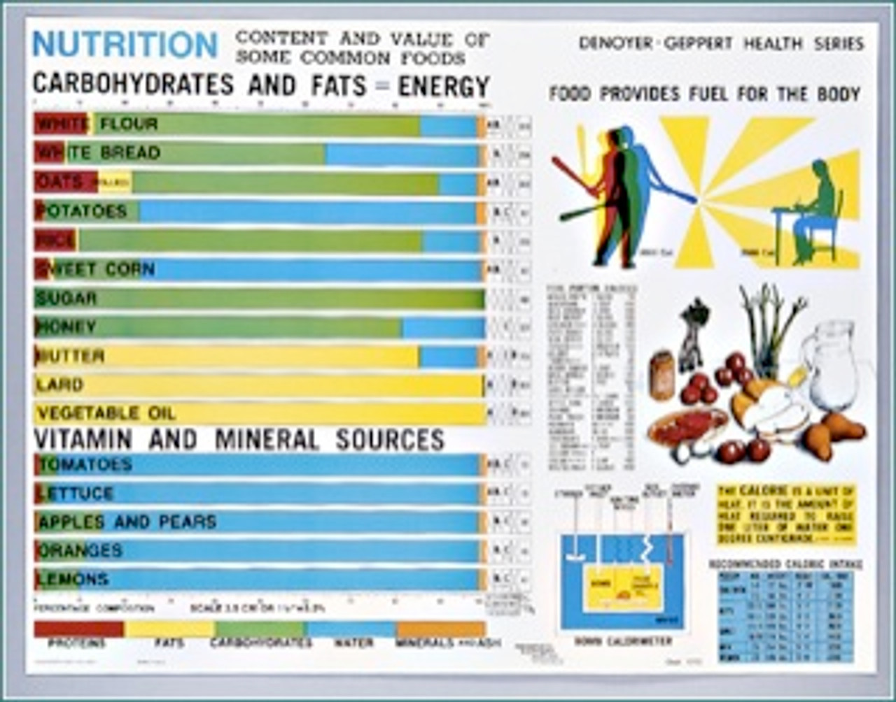 Carbohydrates and Fats Poster