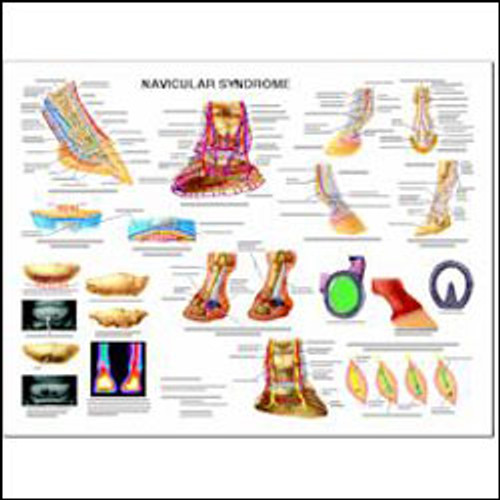Equine Chart, Navicular Syndrome