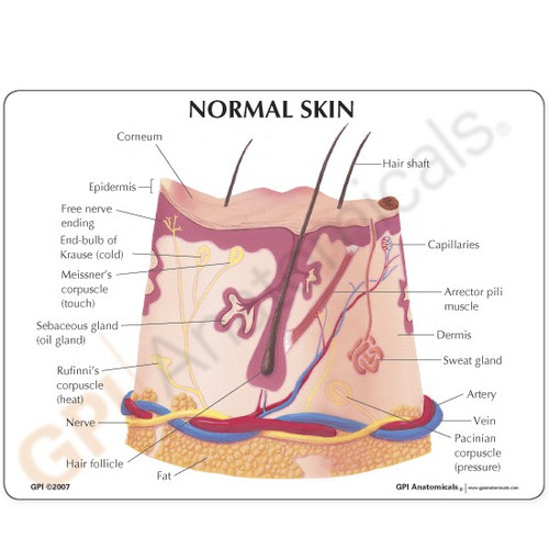 Skin Acne Model Description Card
