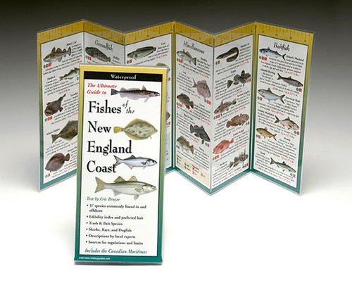 Fishes of the New England Coast
