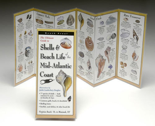 Shells and Beach Life of the Mid-Atlantic Coast
