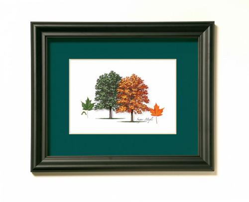 Sugar Maple Tree Print