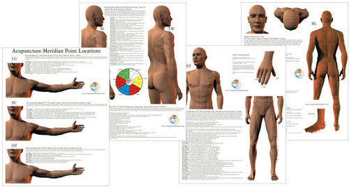 Acupuncture Point Location Study Charts