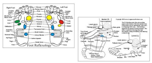 Foot Reflexology Acupressure Card